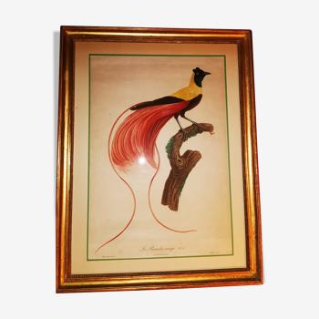 Le paradis rouge n6 gravure colorée d époque barraband imprimerie de langlois vers 1806