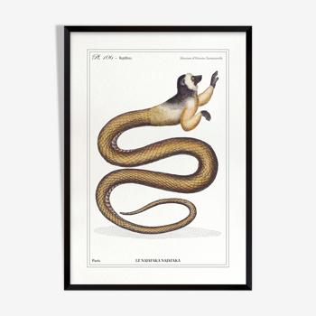 Chimère lithographie gravure animal le najafaka najafaka