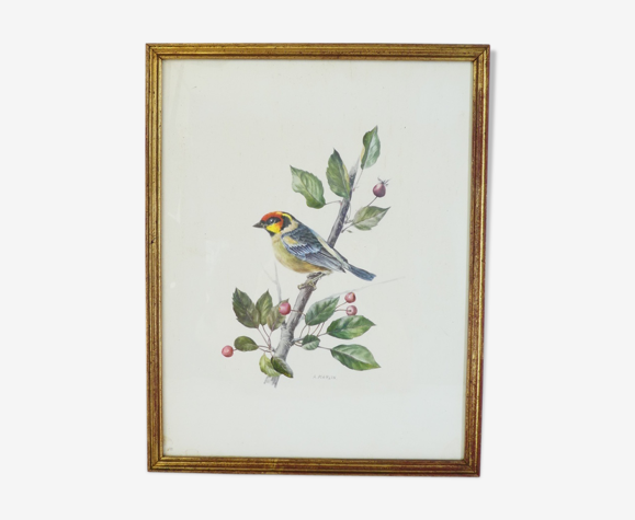 Oiseau chardonneret A. Marlin cadre doré