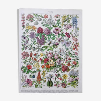 "Illustration Millot ""Fleurs d'arbres"""