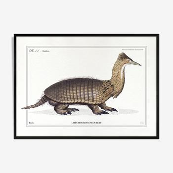 Chimère lithographie gravure animal 15 x 21 cm