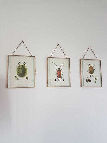 Planche insecte