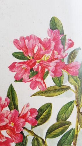 Dessin botanique