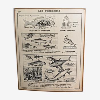 Affiche pédagogique Hatier 1950
