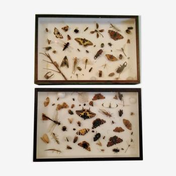 Lot de vitrines entomologiques