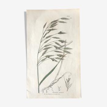 Planche herbier, Ed Londres, 1809