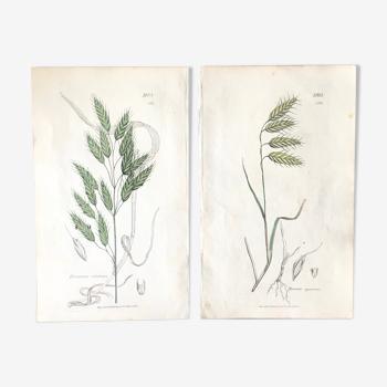 Duo de planches botaniques, Ed Londres 1809