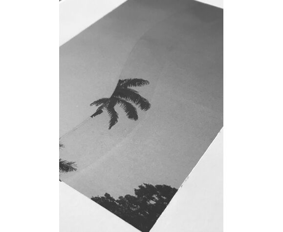 Palm collage