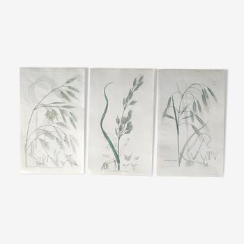 Trio de planches d'herbes Ed Londres 1809