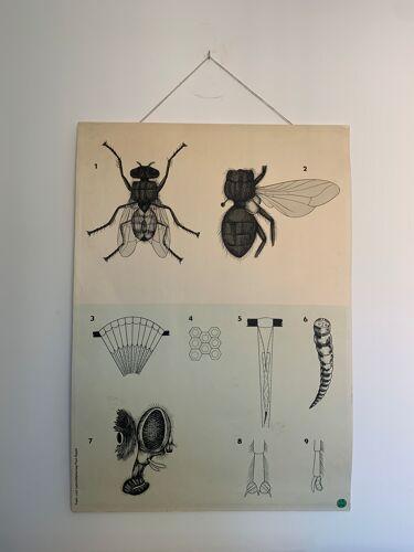 Affiche pédagogique, Autriche, années 1950