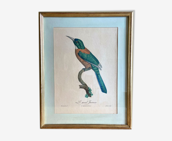 """Lithographie oiseau """"Le Grand Yacamar"""" cadre doré"""