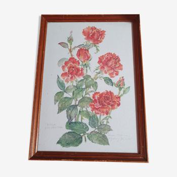 Cadre avec toile peinture vintage rosa polyantha 31cm sur 22cm