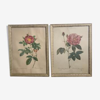 Lot de 2 gravures J P Redouté Roses