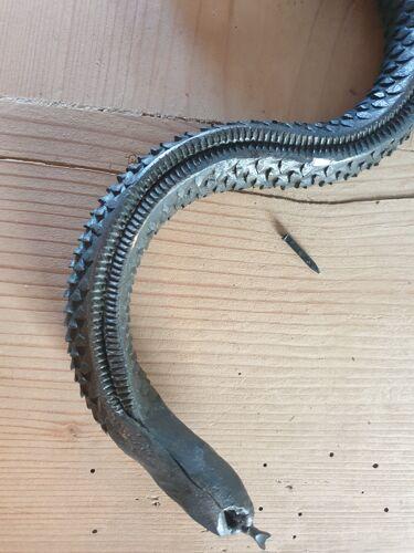 Serpent rappe a bois