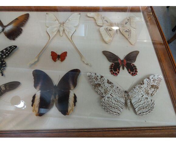 Cadre papillon