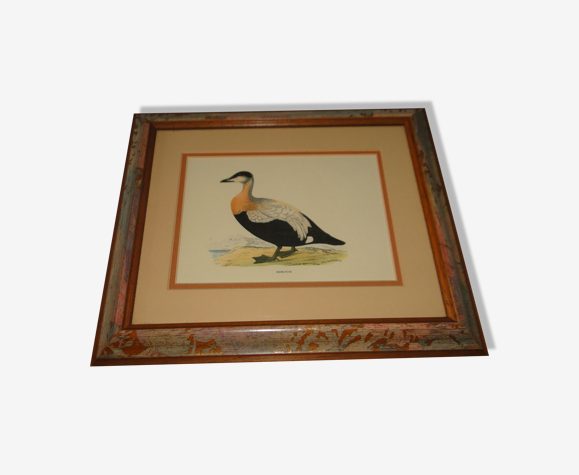 Tableau canard eye reproduction gravure ancienne