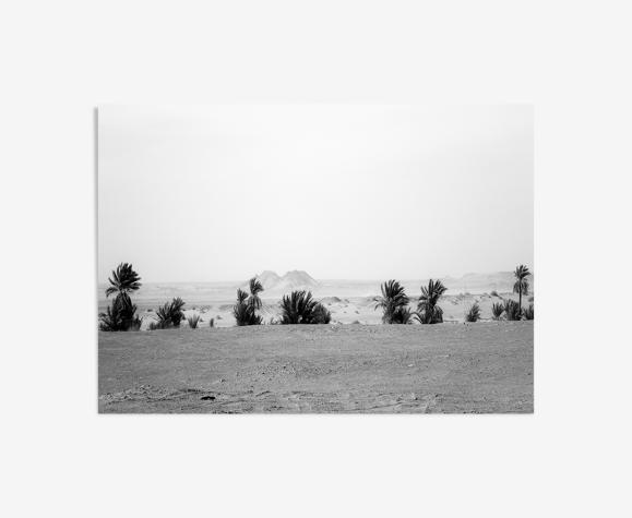 Les palmiers de Timimoune