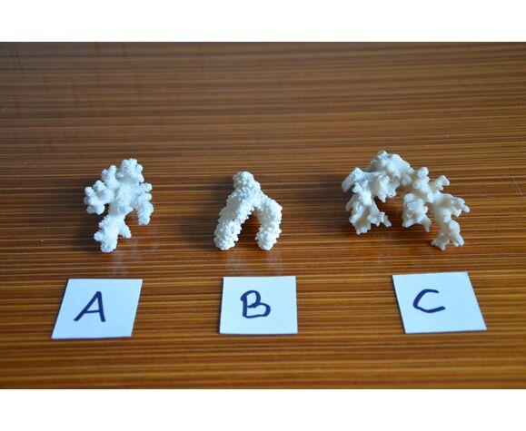 Lot de 3 morceaux de coraux