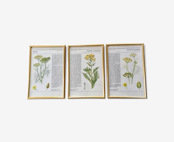 Illustrations botanique encadrées doré vintage 3