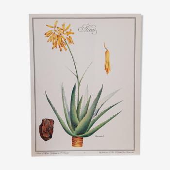 Planche botanique Aloès