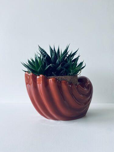 Shell pot cache
