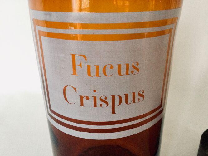 """Pot à pharmacie """"fucus crispus"""""""