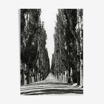 Photographie Route bordée de peupliers, cachemire