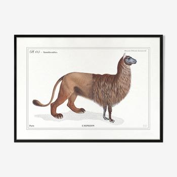 Chimère lithographie gravure animal - 15 x 21 cm