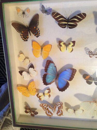 Boîte à papillons vintage