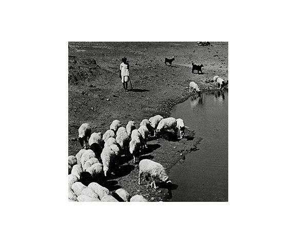 Photographie Transhumance Rajasthan