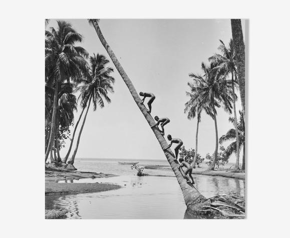 Photo enfant grimpant un arbre palmier a Tahiti. année 50 format 40x60cm