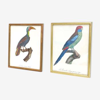 2 affiches lithographies oiseaux cadres dorés