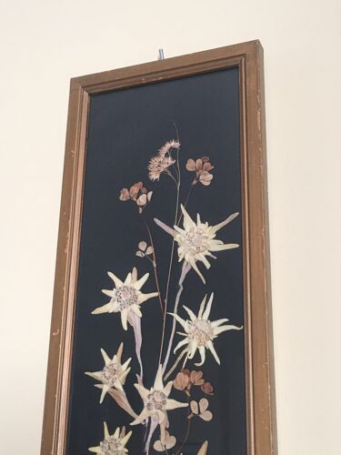 Herbier Edelweiss des montagnes