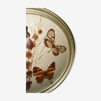 3 papillons taxidermie verre sorcière