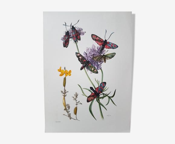 Planche insecte papillons