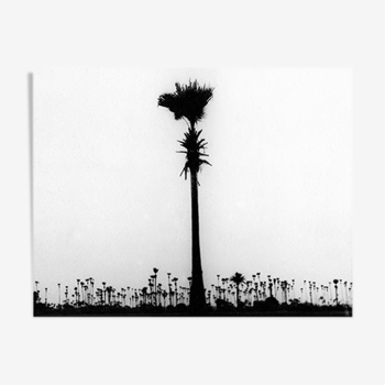 Palmier, Bombay années 70