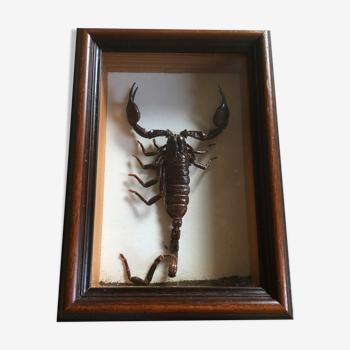 Cadre insecte