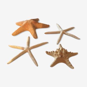 Lot de quatre étoiles de mer authentiques