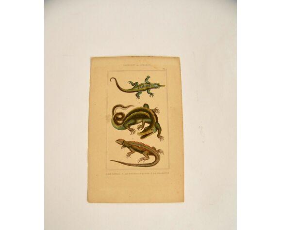 Trois gravures animalières 19e siècle