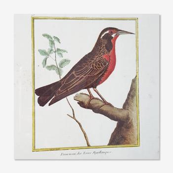 Cadre oiseau rouge