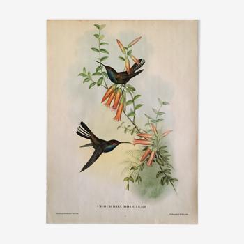 Lithographie J. Gould et H-C Richter